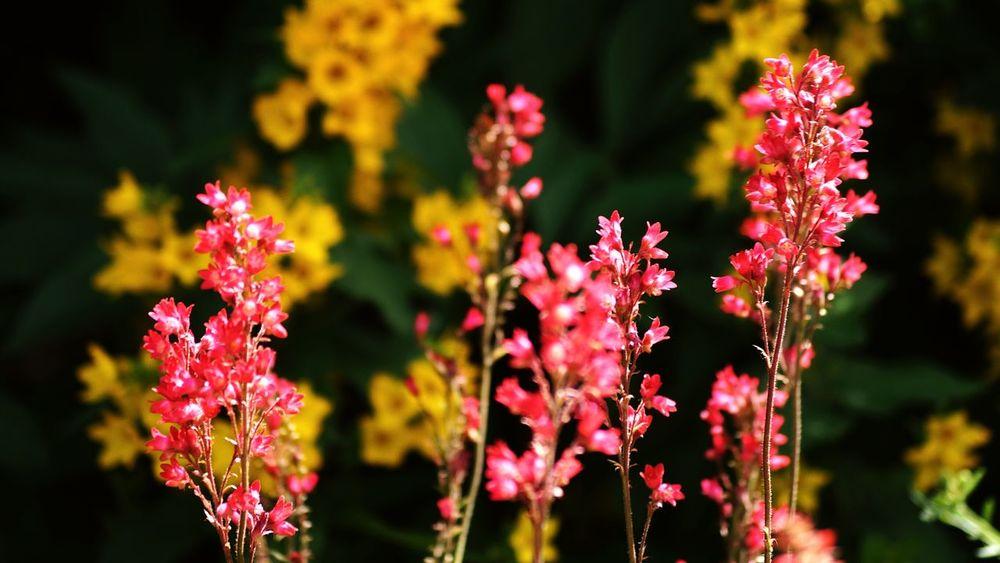 Flowers Sweden Hagalund Solna 43 Golden Moments Showcase July Hidden Gems  Colour Of Life 2016 Juli Niklas BYOPaper! The Week On EyeEm Perspectives On Nature Summer Exploratorium
