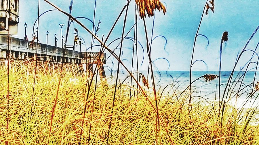 Grass Growth Outdoors Day No People Water Sky Clear Sky NCPhotographer Ncphotography NC Wrightsvillebeach Wrightsvillebeachnc Wrightsville Beach Wrightsville Beach NC