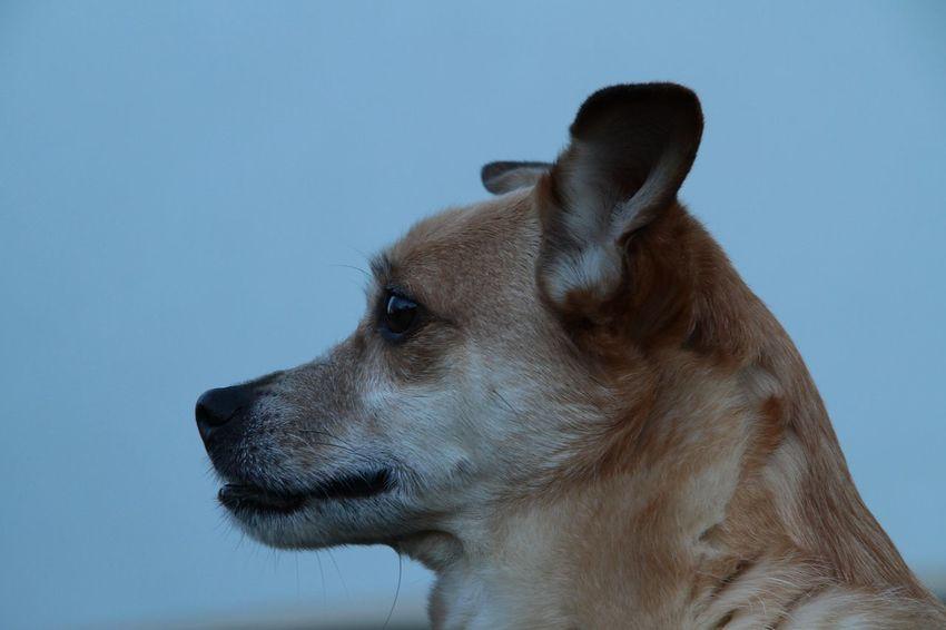 Sparky Mein Hund Ich Liebe Mein Hund My Dogs