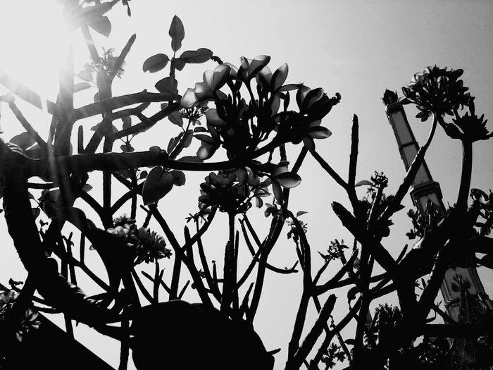 Taking Photos ,black&white That's Me