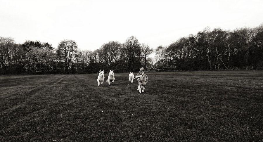 Out with my dogs Sony XZ German Shepherd Dogs Of EyeEm Tree Sports Uniform Soccer Childhood Sky Grass