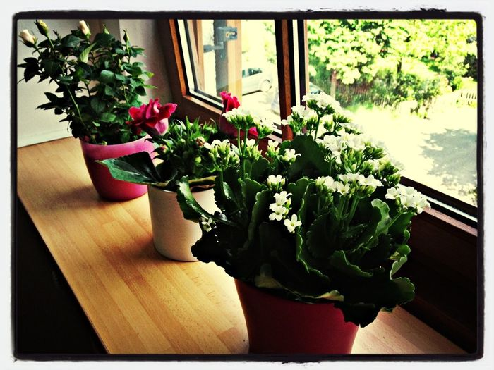 Spring On My Windowsill