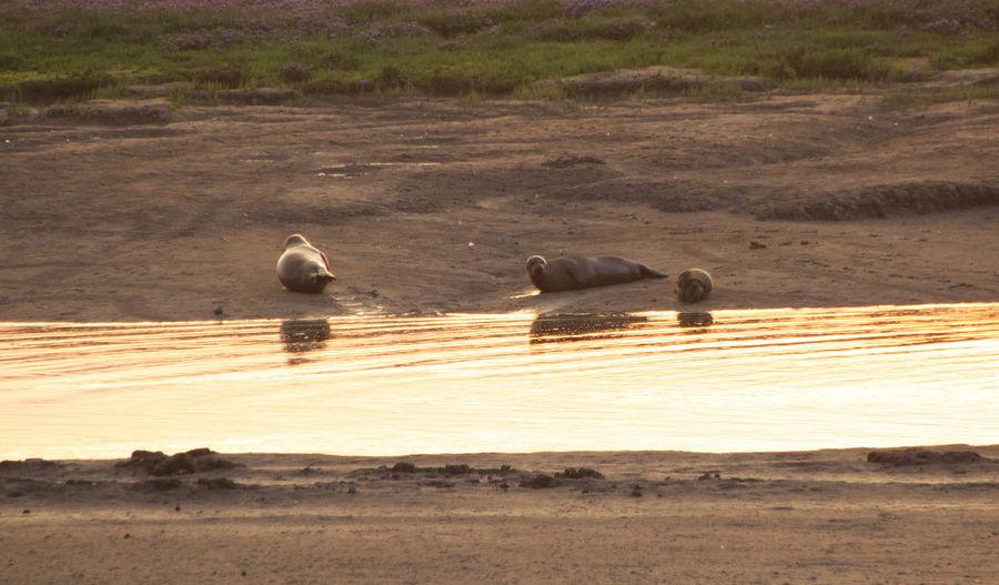 Seals Summer