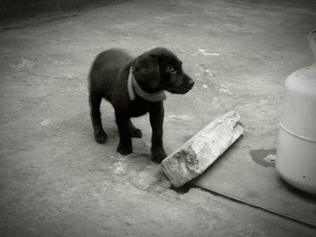 """Mi perro """"BONO"""" cuando era cachorro!"""