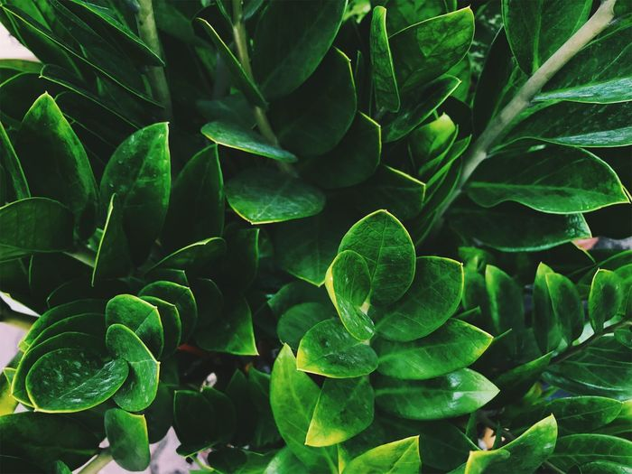 Full Frame Shot Of Green Leaves