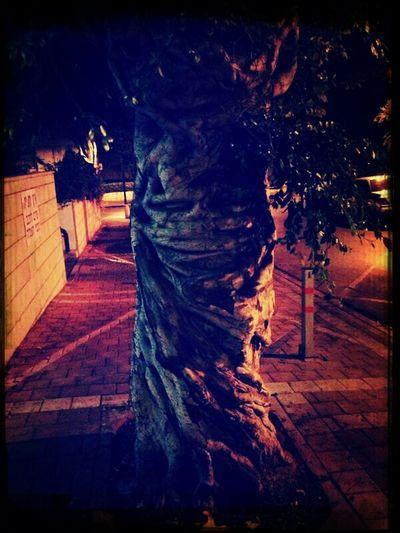 כל עץ והסיפור חיים שלו.