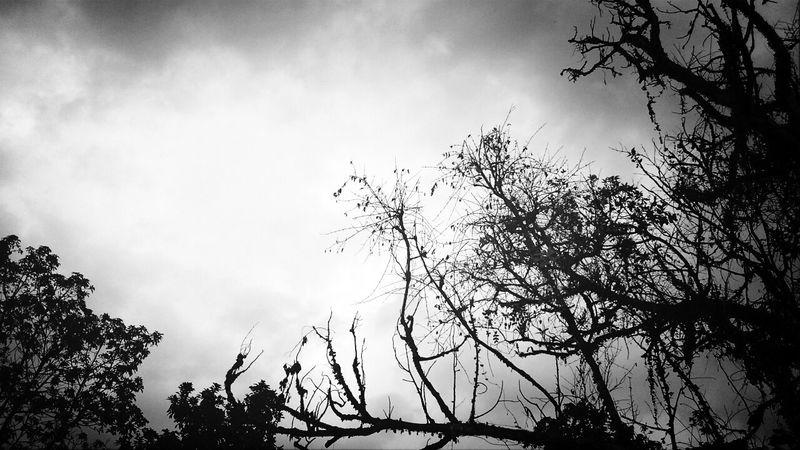 Tree Fortheloveofediting Fortheloveofblackandwhite