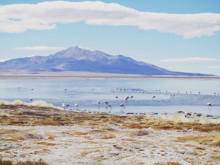 Flock of birds on shore against sky