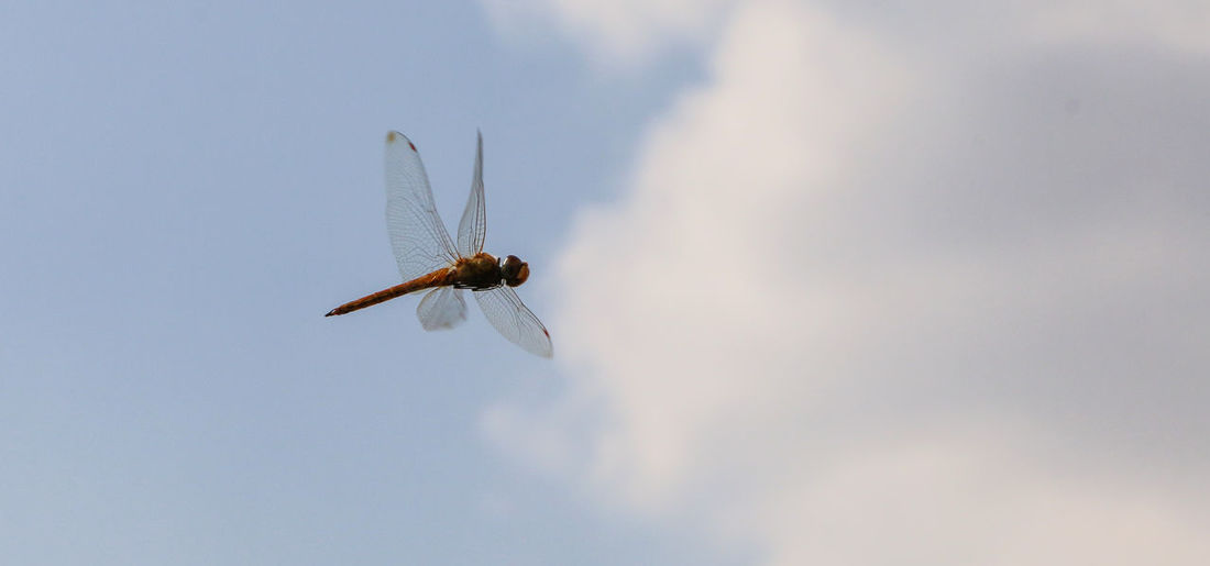 Adventure Animal Themes Animal Wing Animals In The Wild Beauty In Nature Depth Of Field Dragonfly Dragonfly Environmental Conservation Flying Insect Insect Photography Insects  Journey Low Angle View Mid-air Nature No Limits No People One Animal Outdoors RISK Selective Focus Wildlife Winged