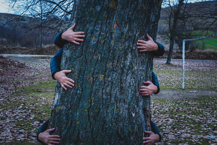 Close up of tree and human hands carrying the tree