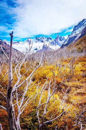 Road to cerro torre EyeEmNewHere Snow Sky No People Patagoni El Chalten Argentina, Cerro Torre Mountain Trees