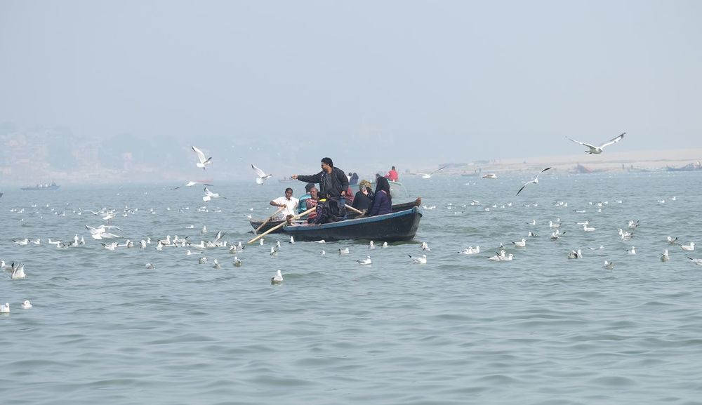 Animals In The Wild Beauty In Nature Bird Clear Sky Day Fisherman Horizon Over Water Large Group Of Animals Large Group Of People Lifestyles Men Nature Nautical Vessel Outdoors People Real People Scenics Sea Sky Togetherness Water Waterfront