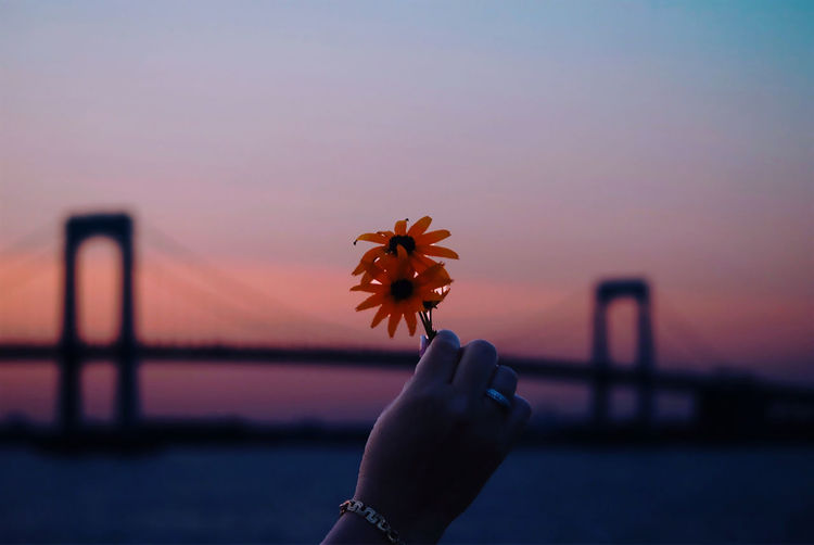 Person holding orange flower against sky during sunset