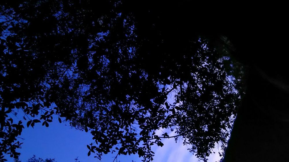 Up at the Night Dusk Colours Dusk Tree Up Star - Space Blue Night Astronomy Space Nature No People Tree Sky Outdoors
