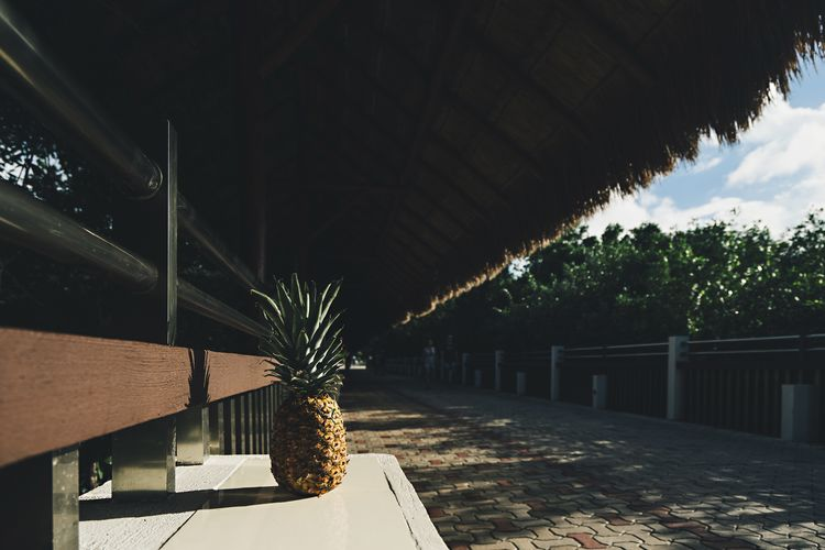 Pineapple On Bench