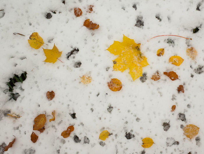 Winter Snow Cold Temperature No People White Color Covering Day High Angle View Nature Paw Print Full Frame Backgrounds Yellow Field Directly Above Outdoors Close-up Autumn Leaves