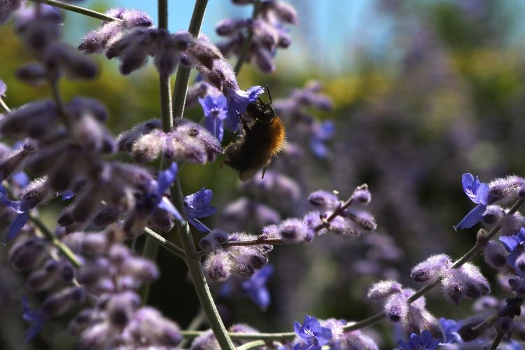 busy bee Nature