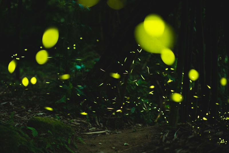 Close-up of illuminated lights on field
