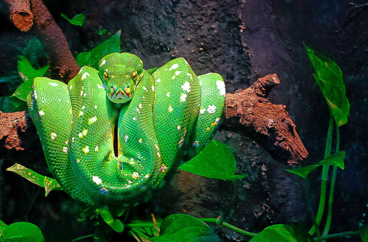 Coil Green Green Color Leaf Plant Snake Thinking Zoo