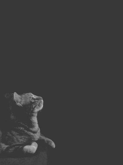 Happy New Year!! Black And White Cat Gatos Gato Cats Of EyeEm Cats Cat One Animal Pets Animal Themes Domestic Animals Copy Space Animal Domestic Cat Black Background Close-up No People
