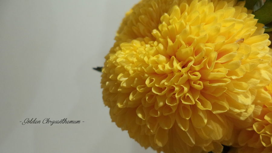 Chrysanthemum Flower Flower Photography Sony Dsc-w710 EyeEmNewHere