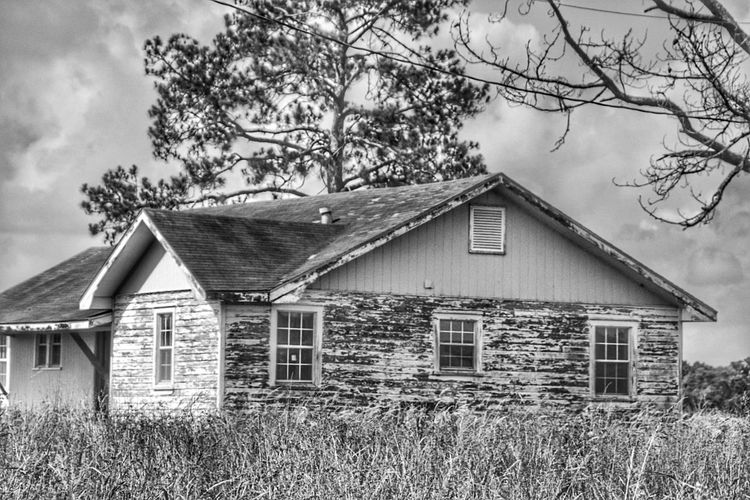 Abandoned house along the way South Louisiana Wooden House Grassy Windows Tree Texture Pattern, Texture, Shape And Form Full Frame Rural Scene Grass Tree Pealing Paint