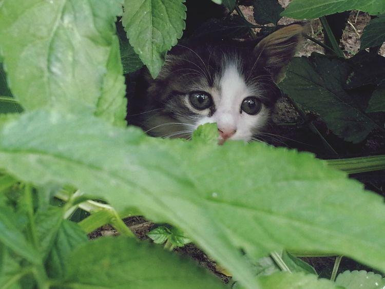 Welcome to the jungle! Welcome To The Jungle Cat Cats Cute Pets Mycat♥ Taking Photos Check This Out Eyemnaturelover Eyemanimals Eyem Gallery