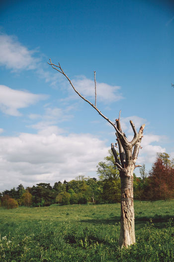 Bare Tree Beauty In Nature Blue Cloud Cloud - Sky Day Field Grass Grassy Growth Landscape Nature No People Non-urban Scene Nonsuch Nonsuch Park Plant Remote Rural Scene Scenics Sky Tranquil Scene Tranquility Tree Tree Trunk