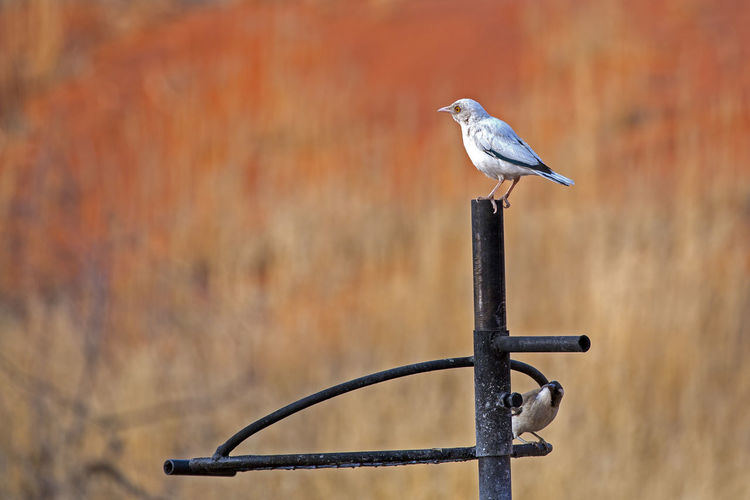 South Africa Animals In The Wild Bird Birds Birds_collection Two Birds Vogels