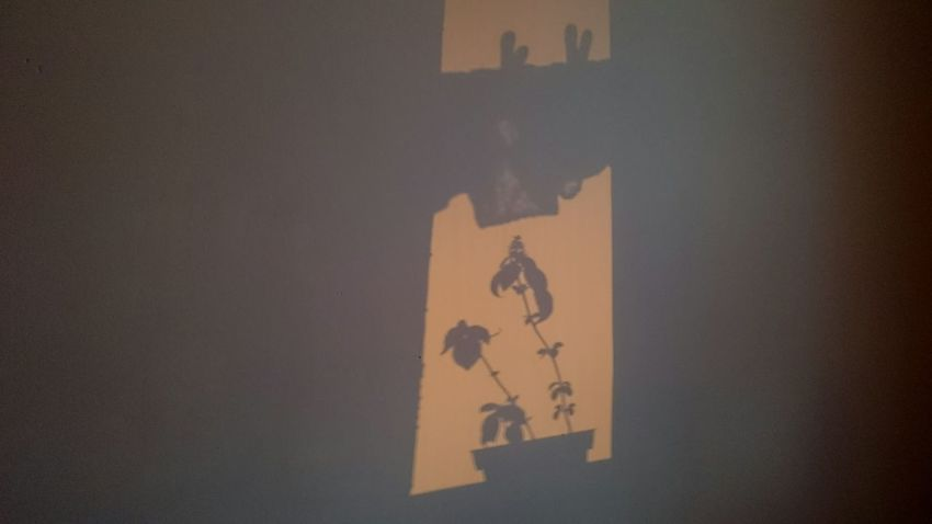 Indoors  Shadows & Lights Shadow Plant Silhouettes Plant Shadow Golden Hour Spontaneous Art Basil Sunset Silhouettes