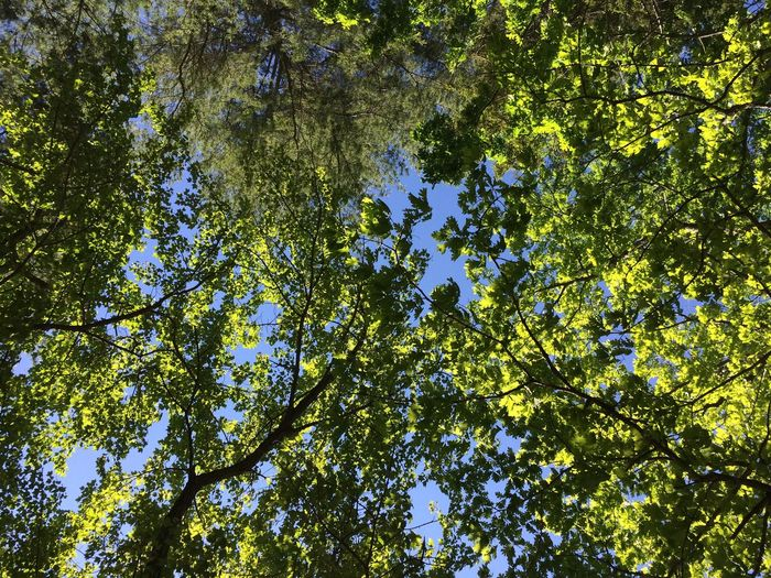 Tree Low Angle View Growth Nature Branch Beauty In Nature Day Green Color No People Outdoors Forest Leaf Bird Sky