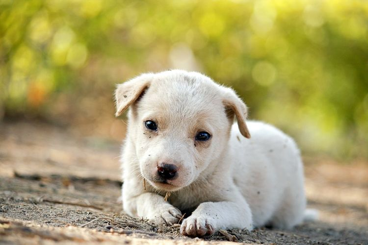 EyeEm Selects Dog Pets Animal One Animal Puppy Cute Young Animal Looking At Camera Portrait Mammal Domestic Animals Outdoors Animal Hair Animal Themes Happiness Day No People Cheerful Smiling Ear Bokeh Photography Depth Of Field
