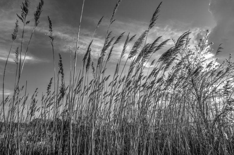 """""""Tall Grass on"""