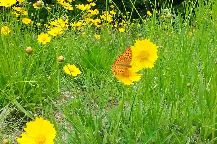 Butterfly Beautiful Nature The Nature Of Beauty Nature Yellow Flower Flowers Yellow Swallowtail Butterfly