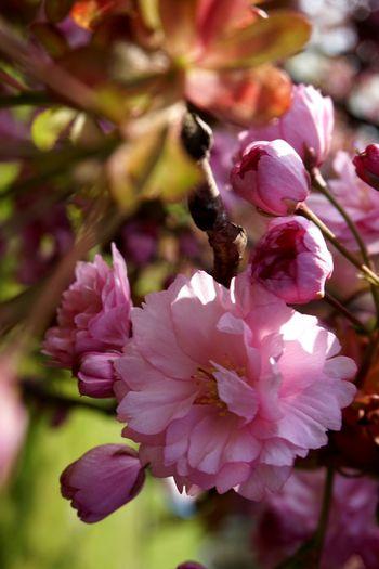 Gärten Der Welt Check This Out Taking Photos Enjoying Life Japonesegarden Flowerporn