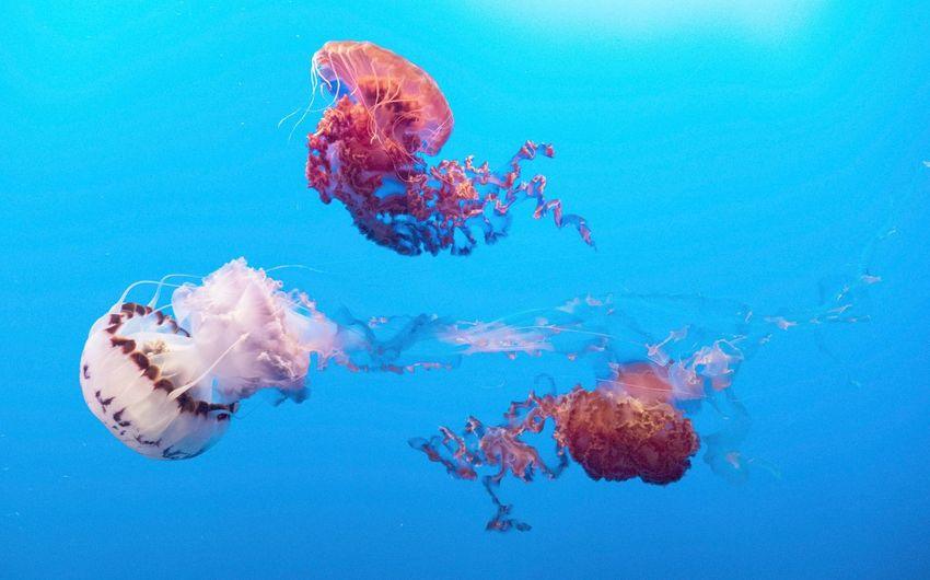 Close-up of jellyfish swimming undersea