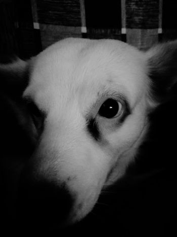 Dogs DogsPH Asiandog Monochrome Petphotography Pet Aspin P10 PhonePhotography Eyeemph Eyeemasia Mansbestfriend