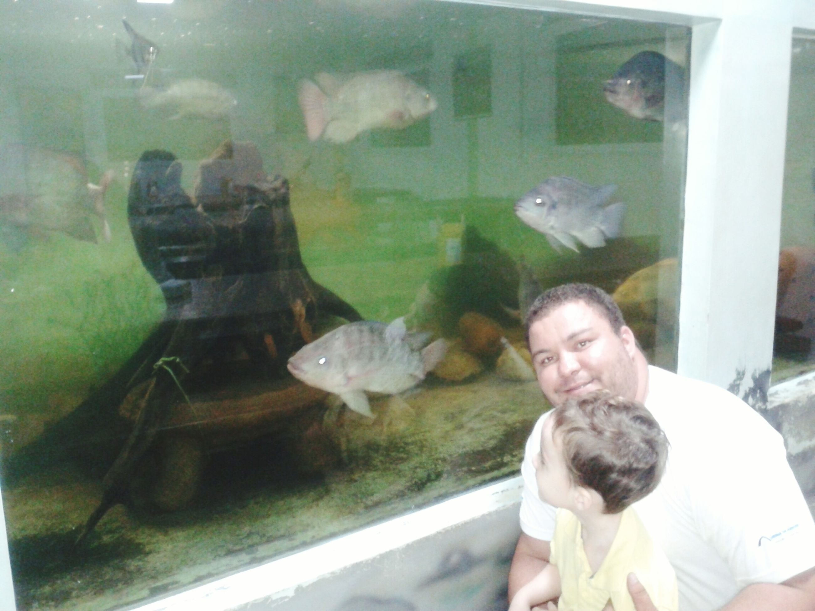 animal themes, indoors, transparent, glass - material, lifestyles, water, window, leisure activity, wildlife, animals in the wild, swimming, one animal, fish, person, people, sitting, looking, holding