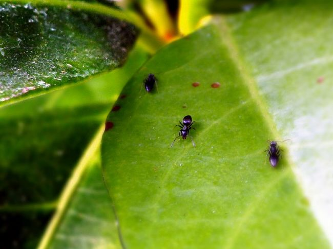 Insects  Black Ants Leaves Nature Still Life Up Close Macro Photography