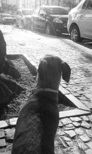 Mydog♡ Nick Streetphotography Black & White Streetphoto_bw Light And Shadow Blackandwhite Photography Tree And Sun Tree_collection  Monochrome