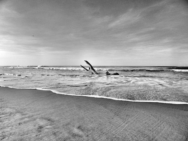 Wood and sand. Acapulco Playa Beach Mexico