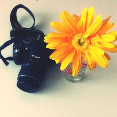 Nikon D5100  Benimkadrajim çiçek