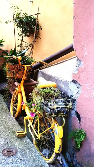 Bycicle Lovers Bycicle Photography Bycicle Art Bycicle Old Flower Bycicle And Flowers Romantic Bicycle