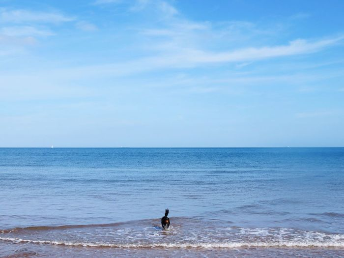 Sea Horizon Over Water Water Sky Beach Real People Leisure Activity One Person Scenics Beauty In Nature Outdoors Lifestyles Day Nature Dog