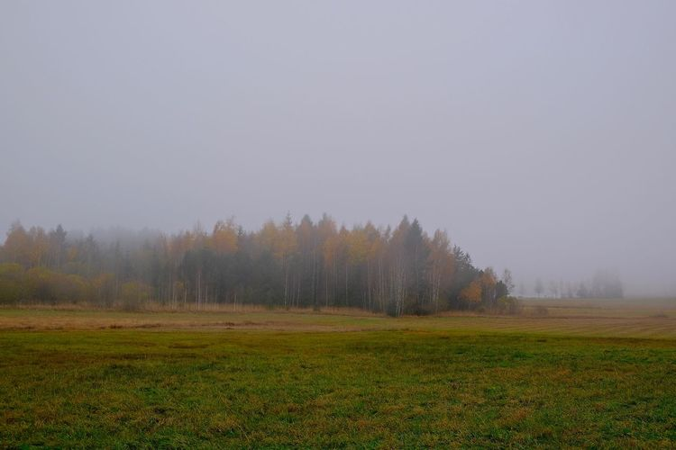 Landscape Environment Fog Tranquil Scene No People Nature Tranquility Field Autumn colors Autumnmood