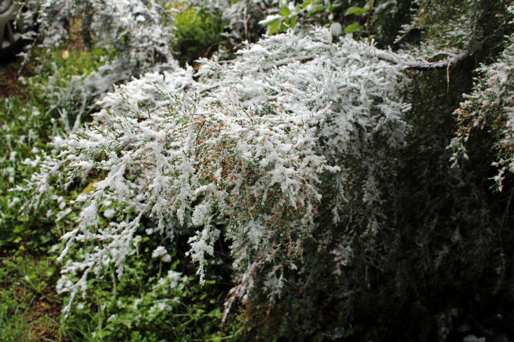 Close-up of white flowering plant in forest
