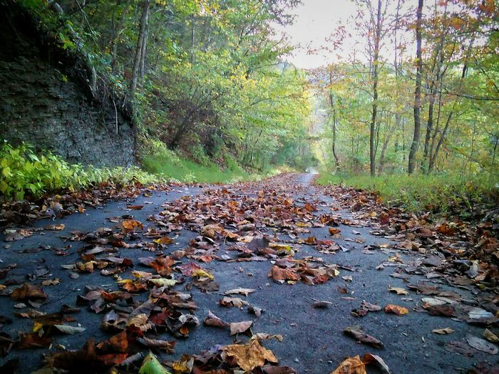 Going Home Walking Beauty Road Time To Reflect Home Peace Fall Nature Autumn Beautiful World