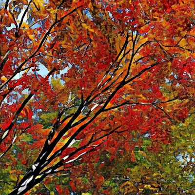 Autumn Change Nature Leaf Tree Beauty In Nature Growth Branch Full Frame Scenics Backgrounds Multi Colored Maple