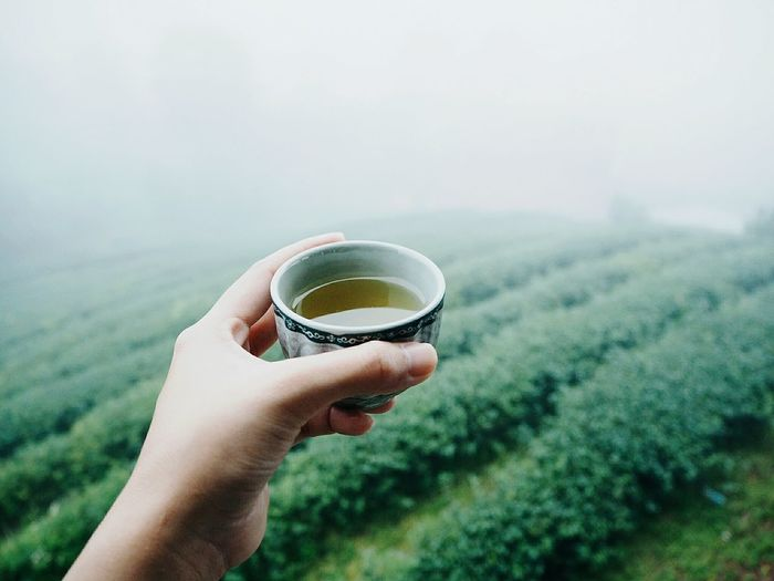 Cropped Hand Holding Tea In Cup Against Farm During Foggy Weather
