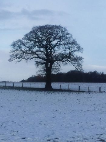 Tree Winter Bare Tree Lone Branch Snow Cold Temperature Isolated Beauty In Nature Sky No People Tranquility Outdoors Day